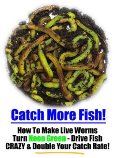 How To Make Live Composting Worms Turn Neon Green To Drive Fish Crazy and Improv. - How To Make Live Composting Worms Turn Neon Green To Drive Fish Crazy and Improve Your Catch Rate… Fishing Worms, Crappie Fishing, Gone Fishing, Fishing Bait, Best Fishing, Fishing Tips, Fishing Stuff, Fishing Tackle, Fishing Quotes