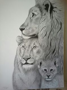 Lion family.  Large pen and ink drawing . Yvonnemayartist.co.uk