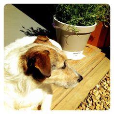 Murray soaks up some sun