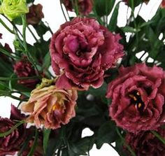 Brown Lisianthus Mayesh Wholesale Florists - Search our Flower Library