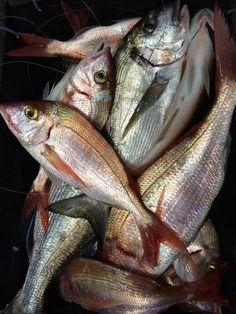 poissons de Mediterranée