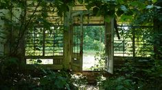 overgrown nature - Google Search