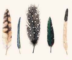 feather love