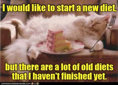 Unfinished Business http://cheezburger.com/9032496896/new-diet-cat-vs-old-diets