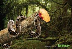 Šokující reklama proti kácení pralesa - Sanctuary Asia | Yab