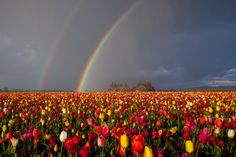 I have a mental picture of a triple rainbow over the Willamette River I saw long ago.....Oregon - Photo by: Jesse Estes
