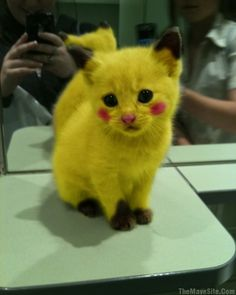 Pikachu Cat! Oh so ridiculously cute. And nerdy. That's a plus.