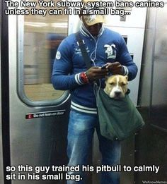 Pitbull Sits In Small Bag On New York Subway