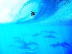 Una ola del mar con delfines abajo de ella. pic.twitter.com/G6CVA6AfkQ