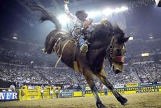 The most talented cowboys in the country are returning to Las Vegas in two weeks and this time they're going to make a lot more money at the National Finals Rodeo. National Finals Rodeo, Rodeo Cowboys, Back Road, Cowboy And Cowgirl, Texans, Horse Riding, Country Music, Wildlife, Horses