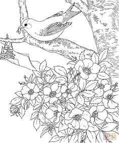 free printable coloring page - arkansas state bird and