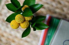 craspedia. bouquet flowers.