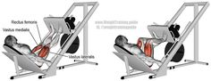 """Incline leg press. A compound exercise. To learn how to emphasize different muscles by adjusting the positioning of your feet, visit site and read the """"Comments and tips"""". Target muscles: Quadriceps. Synergists: Gluteus Maximus, Adductor Magnus, and Soleus. Dynamic stabilizers (not highlighted): Hamstrings and Gastrocnemius. Note: I only highlight targets and synergists."""