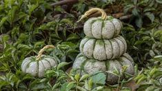 Here's a fun Pumpkin idea for your fall decor! Of all the pumpkin ideas I would have to say these concrete pumpkins really stuck to me. They are super versatile and take under an hour Fake Pumpkins, Plastic Pumpkins, Glass Pumpkins, Concrete Crafts, Concrete Projects, Concrete Garden, Concrete Art, Diy Projects, Concrete Casting