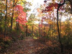Martinsville-Henry County, Virginia is just a short drive away from Fairy Stone State Park.  Come visit soon to enjoy the splendor of fall!