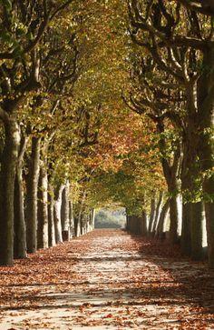 Autumn in Coimbra, Portugal