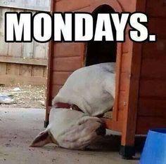 Monday's...