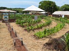 Projeto PAIS utiliza a irrigação por gotejamento e economiza metade da água que…