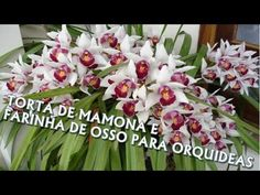 Adubação Orgânica Para Orquídea