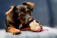 cute little mutt puppy, maybe a baby selma?