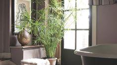 Le papyrus, une plante d'intérieur belle et facile à vivre ! Nos conseils pour le cultiver et l'utiliser dans la déco. Papyrus, Belle Plante, Horticulture, Amazing Gardens, Garden Plants, Home, Terrarium, Gardening, Landscape