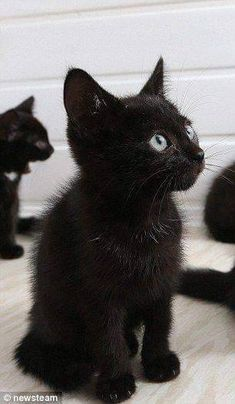 Funny Cute Cats Kittens Eyes 38 Ideas For 2019 Funny Cute Cats, Funny Cats And Dogs, Cute Cats And Kittens, Kittens Cutest, Funny Kittens, Black Kittens, Baby Cats, Kittens Meowing, Baby Kitty