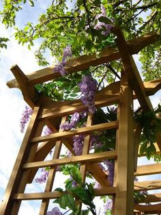 Make use of a pergola. Wisteria, climbing roses, clematis are wonderful climbers. Make use of a pe