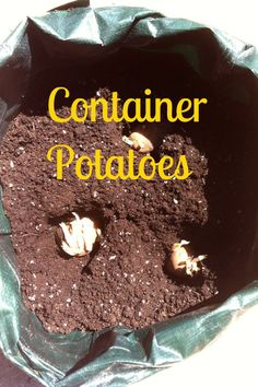 I Grew This! Saturday #2 Container Potatoes   How Was Your Evening?