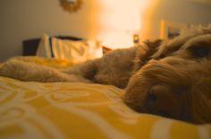 . Mans Best Friend, Best Friends, Dogs, Photography, Animals, Beat Friends, Animales, Animaux, Pet Dogs