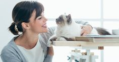 How Does A Career Cuddling Cats Sound? You Might Be In Luck.
