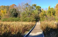 Minuteman Trail, Lexington, MA - I think this is a boardwalk in the Great Meadows.