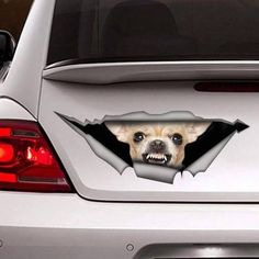 Snarling #chihuahua Trunk Decal