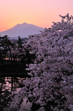 弘前城本丸からの夕焼けと岩木山と桜 Hirosaki, Aomori Places Around The World, Around The Worlds, Anime Japan, Japan Japan, Japan Holidays, Tokyo Skytree, Aomori, Country Landscaping, Beautiful Places To Travel