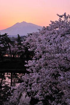 弘前城本丸からの夕焼けと岩木山と桜 Hirosaki, Aomori