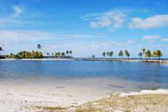 Matheson Hammock Park - Coral Gables Miami Florida, South Florida, Miami City, Ormond Beach, Atlantic Beach, Coral Gables, Daytona Beach, Columbus Ohio, Hammock