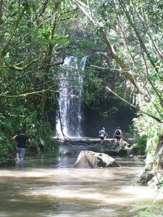 A must do while at Maui is a morning drive to Hana. In this trip, the journey is the destination! There is nothing particular waiting for you at Hana. But the route is scenic and it is fun to stop at the various waterfalls and beaches that dot the entire stretch.