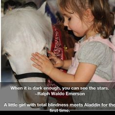 A blind little girl meets Aladdin ... This so touches my heart and so want to do more of with my minis.  Aladdin is only one of about 26 tiny minis servicing GENTLE CAROUSEL  MINIATURE HORSE THERAPY in FL.