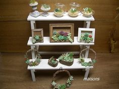 miniatures . That unites two passion of mine , minuatures and succulents plants ! Love it so much !!!