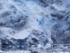 Patagonia: profondo sud - Concerto di ghiaccio - Traveller Cards