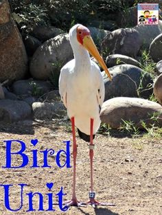 bird unit for preschool and elementary lots of hands on ideas and crafts Preschool Class, Preschool Curriculum, Preschool Science, Science For Kids, Science Activities, Science Projects, Preschool Ideas, Kindergarten, Biology Lessons