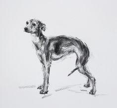 Justine Osborne | Italian Greyhound Standing - Charcoal sketch ORIGINAL – PaintMyDog | Dog Art | Contemporary Dog Portraits