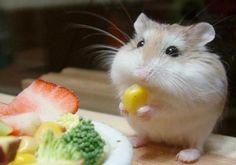Imagem do rato comilão que só sabe come