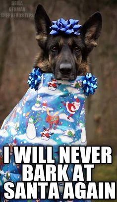 The German Shepherd Funny Dog Memes, Funny Animal Memes, Cute Funny Animals, Funny Dogs, I Love Dogs, Cute Dogs, Cute Puppies, Game Mode, German Shepherd Dogs