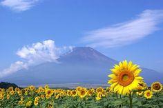 【日本の風景~Japanese scenery~】夏の富士山(Mt. Fuji in summer)
