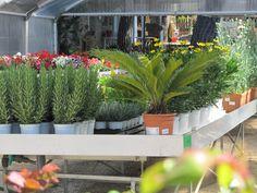 Nuestras instalaciones del #vivero con todo lo que necesitas para tu #jardín www.viverosirun.es