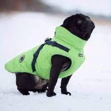 Green puppia fleece lined mountaineer coat   Available at www.ilovepugs.co.uk  post worldwide