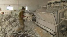 ... in <b>asbestos</b> factory near Ahmedabad scoops up armfuls of raw <b>asbestos</b>