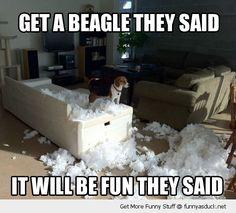 Get A Beagle They Said