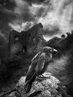 "From the Movie ""The Crow"": ""People once believed that when someone dies, a Crow carries their soul to the land of the dead"" Photo by.......??????"