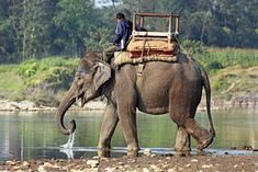 I want to travel across india on one of these magnificent animals